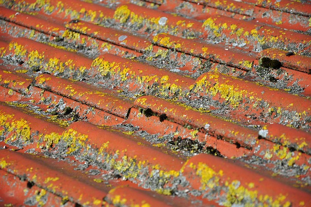Signs Of Roof damage (adco)