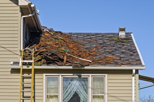 What Causes Roof Rot?